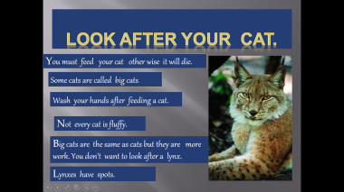 look after your cat